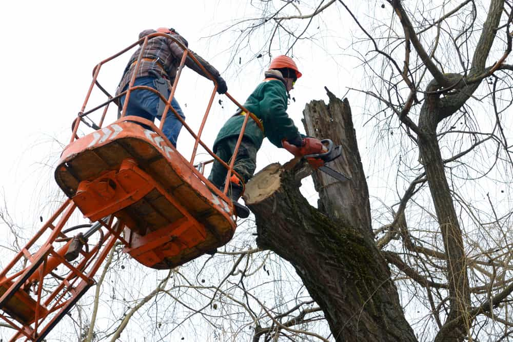 chainsaw tree removal - bucket crew