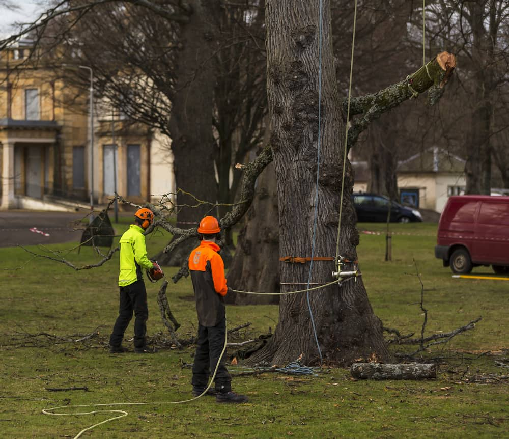 tree removal team